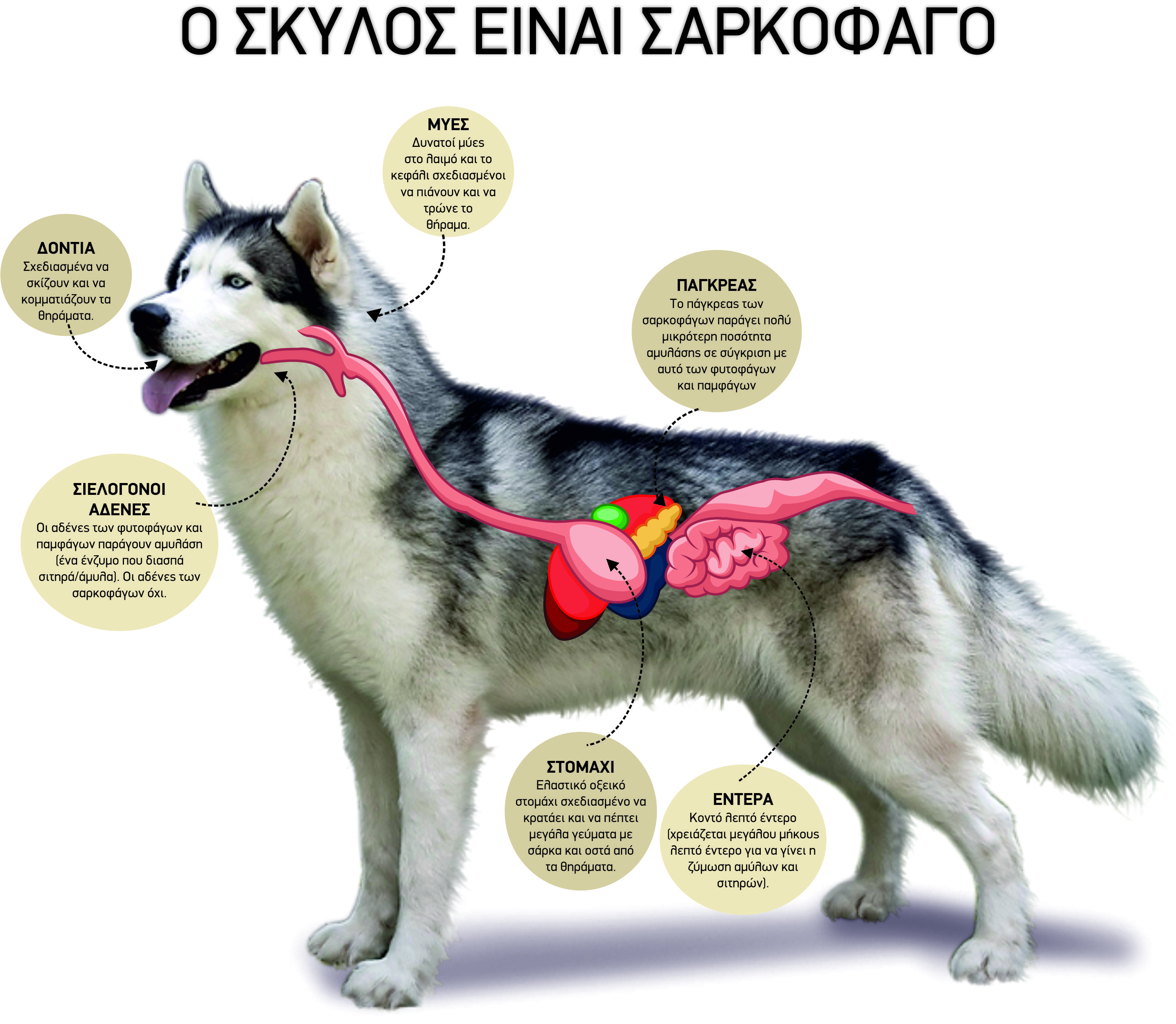Core_Anatomy_Dog_Final.jpg